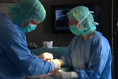 Intervention Chirurgie spécialisée 1